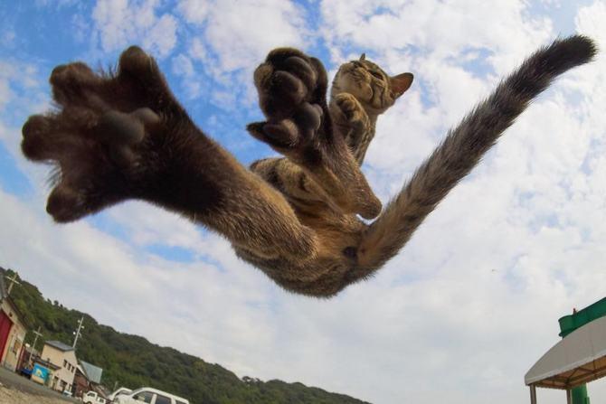 25 gatos que sabe a arte ninja 4