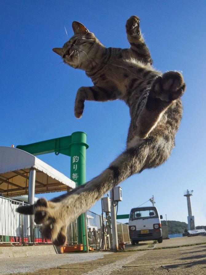 25 gatos que sabe a arte ninja 6