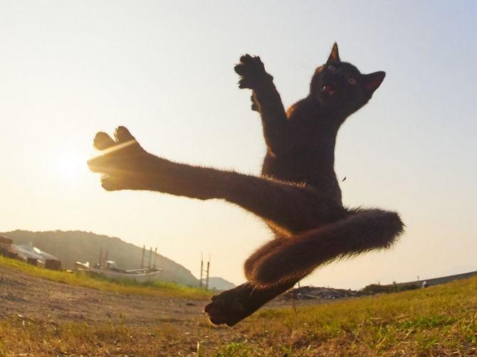 25 gatos que sabe a arte ninja 7
