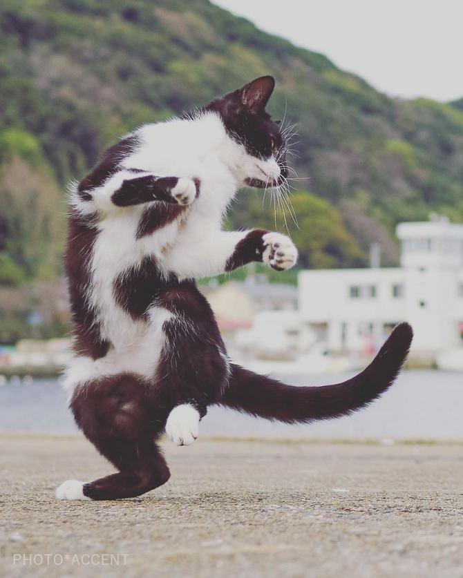 25 gatos que sabe a arte ninja 8