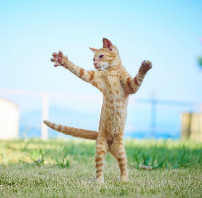 25 gatos que sabe a arte ninja 9