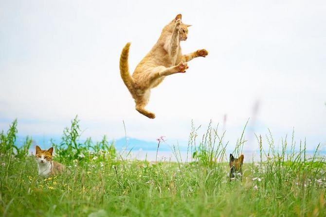 25 gatos que sabe a arte ninja 10