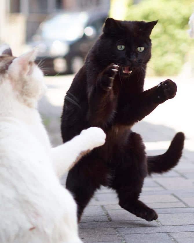 25 gatos que sabe a arte ninja 13