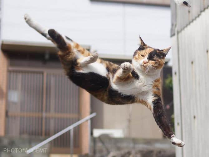 25 gatos que sabe a arte ninja 14