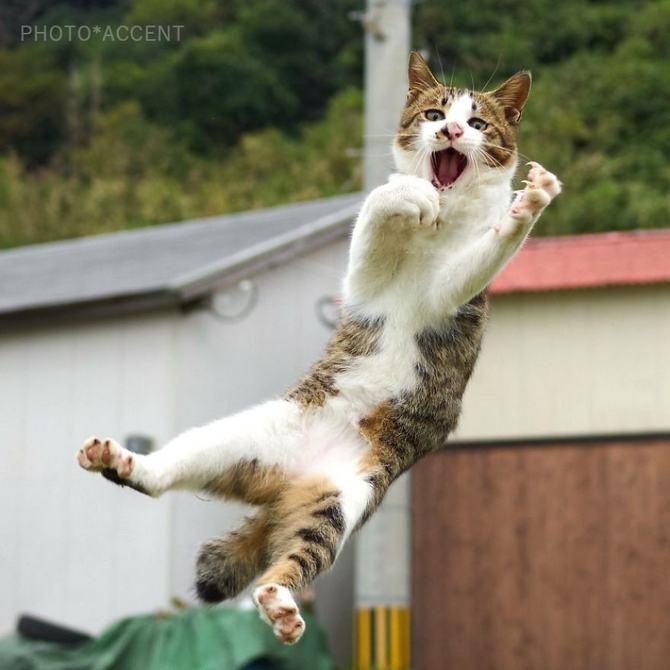 25 gatos que sabe a arte ninja 16