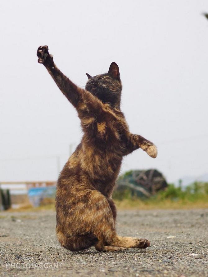 25 gatos que sabe a arte ninja 17