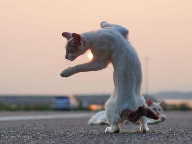 25 gatos que sabe a arte ninja 18