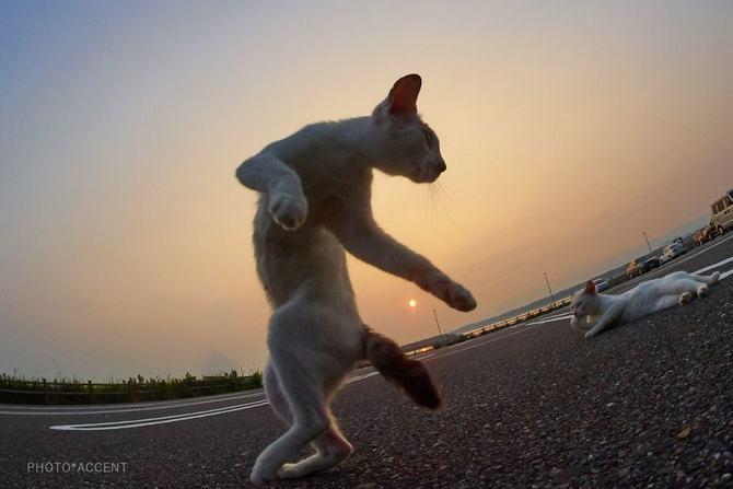 25 gatos que sabe a arte ninja 19