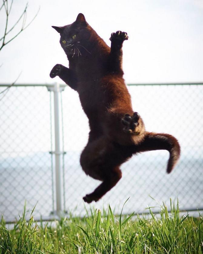 25 gatos que sabe a arte ninja 20