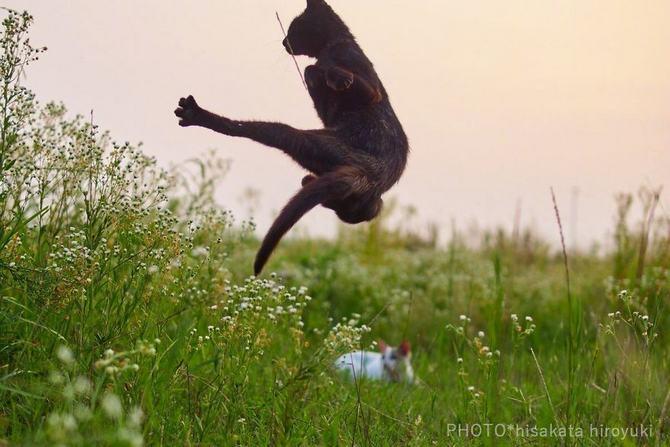 25 gatos que sabe a arte ninja 21