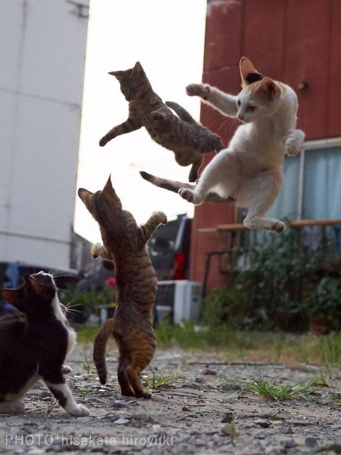 25 gatos que sabe a arte ninja 24