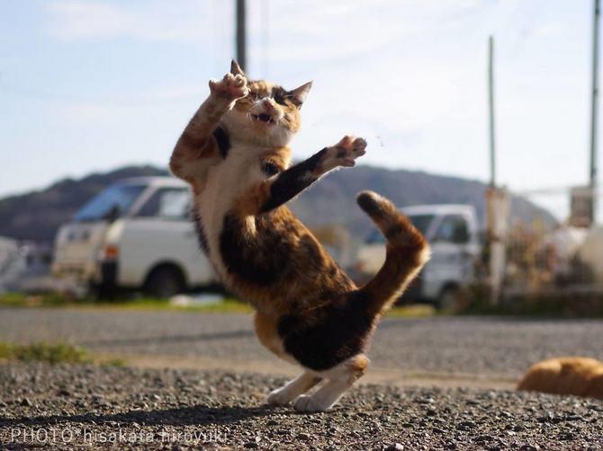 25 gatos que sabe a arte ninja 25
