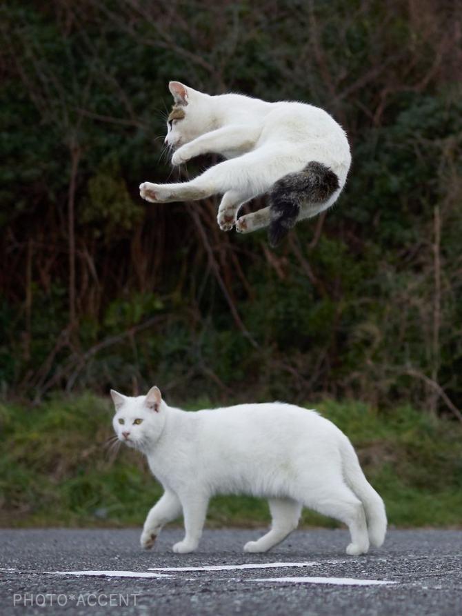 25 gatos que sabe a arte ninja 26
