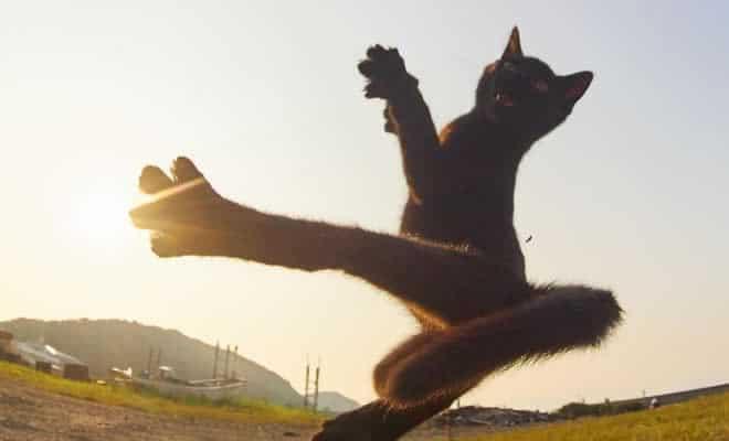 25 gatos que sabe a arte ninja 2