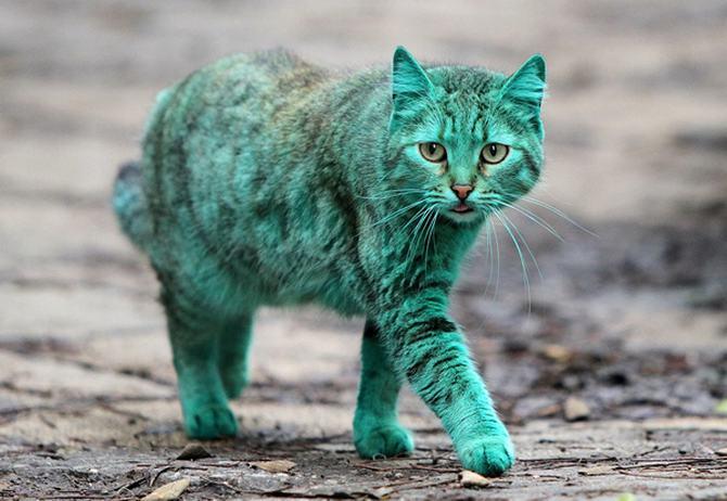 8 gatos únicos na Internet 6