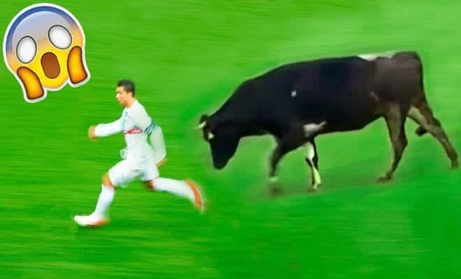 7 invasões de animais em jogo de futebol 7
