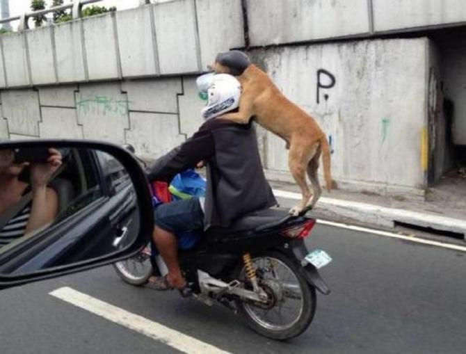 Como eles conseguem suas licenças de condução ?! (36 fotos) 16