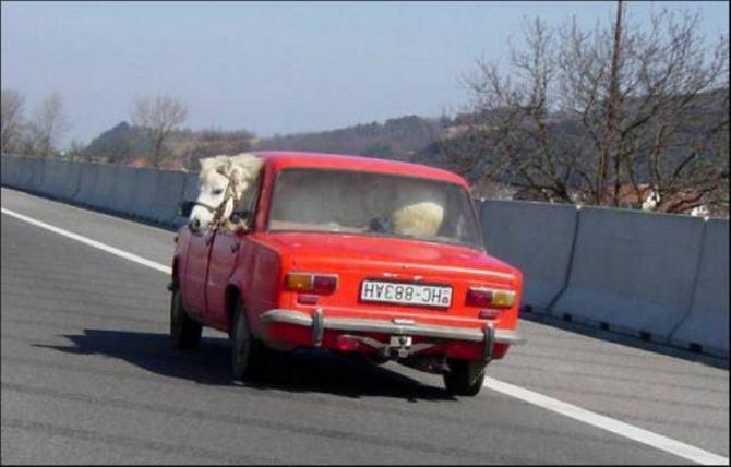 Como eles conseguem suas licenças de condução ?! (36 fotos) 19