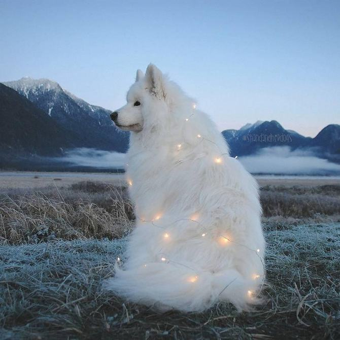 22 fotos para despertar o verdadeiro espírito natalino 15