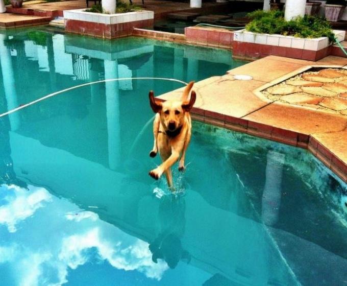 14 fotos divertidas que mostram que os animais de estimação nasceram para desfrutar da vida 3
