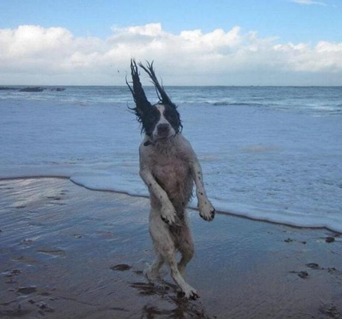 14 fotos divertidas que mostram que os animais de estimação nasceram para desfrutar da vida 9