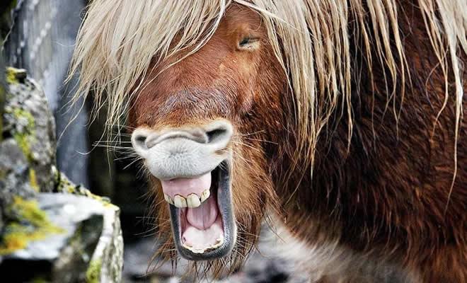 20 animais que parecem extremamente felizes 16
