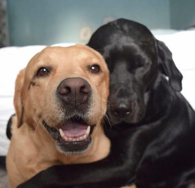 26 fotos que comprovam que dois animais de estimação são melhores do que um