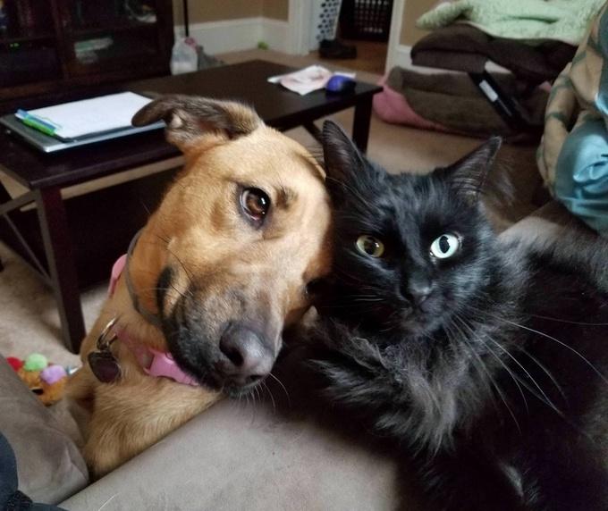26 fotos que comprovam que dois animais de estimação são melhores do que um 4