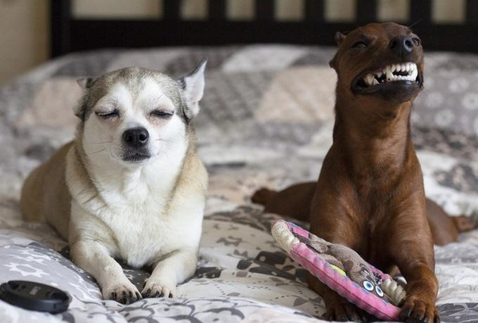26 fotos que comprovam que dois animais de estimação são melhores do que um 8