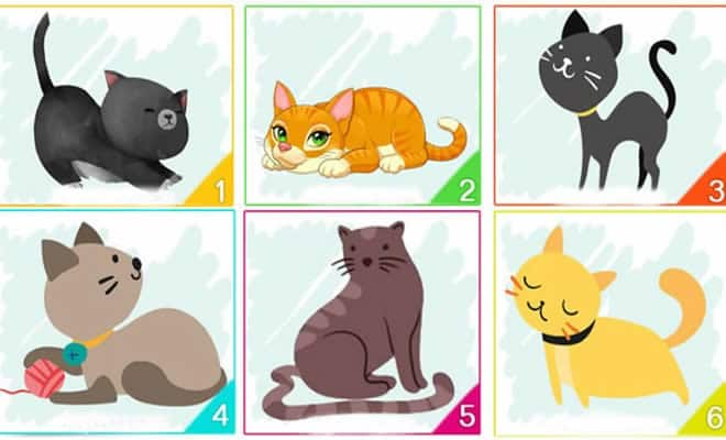 Escolha um gato e descubra informações importantes sobre sua personalidade 5