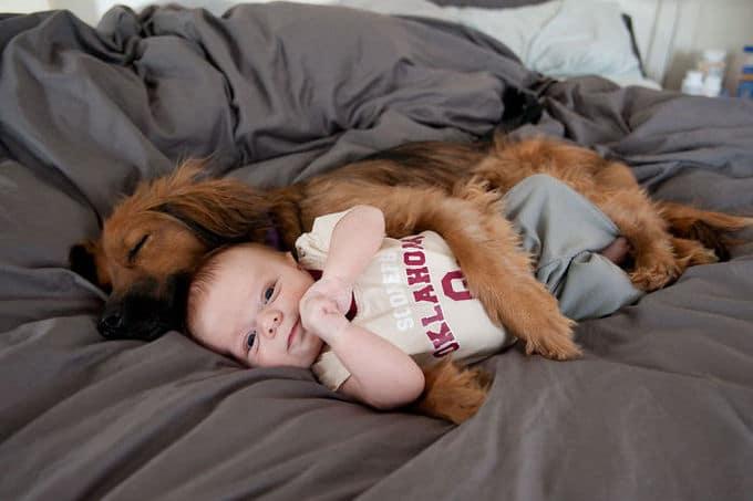 26 exemplos de amor de cachorro incondicional que vai derreter seu coração 4