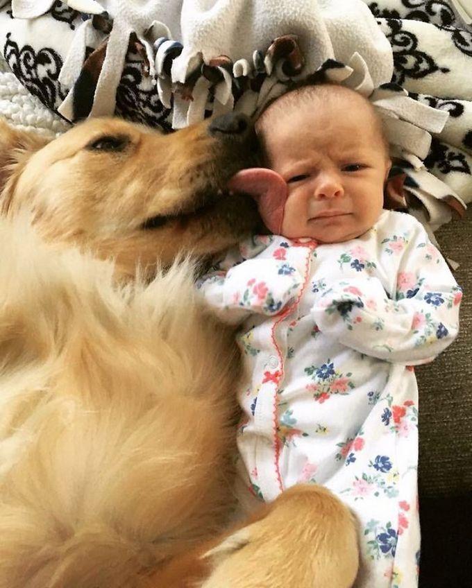 26 exemplos de amor de cachorro incondicional que vai derreter seu coração 6