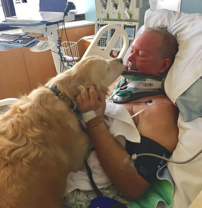 26 exemplos de amor de cachorro incondicional que vai derreter seu coração 8