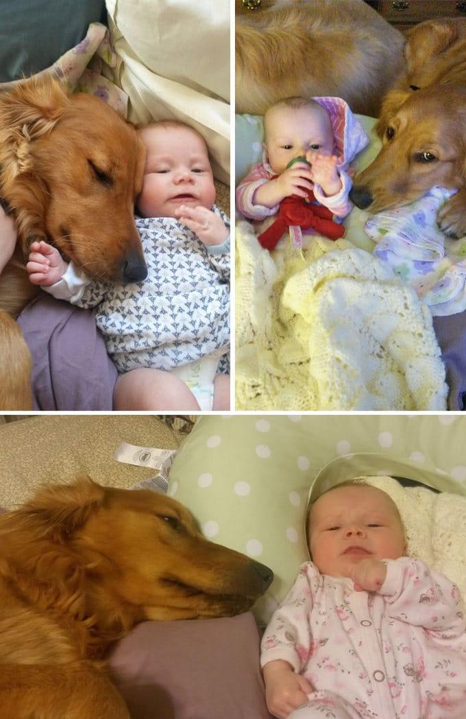 26 exemplos de amor de cachorro incondicional que vai derreter seu coração 11