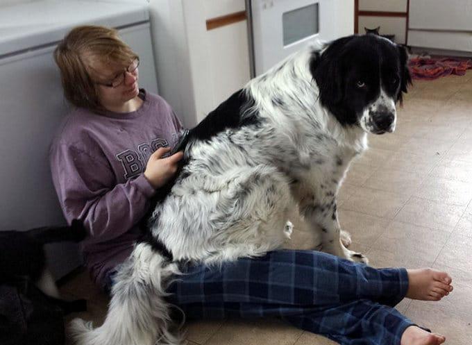 26 exemplos de amor de cachorro incondicional que vai derreter seu coração 16