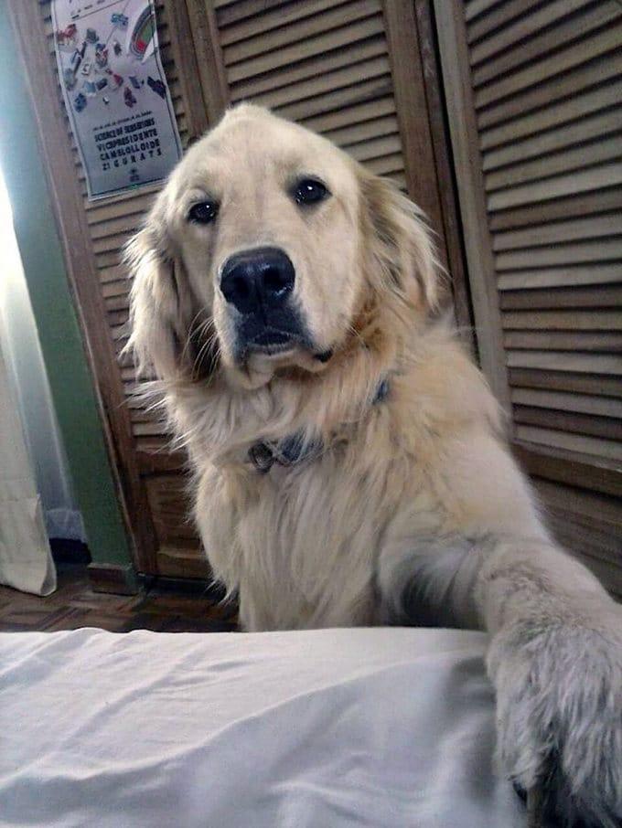 26 exemplos de amor de cachorro incondicional que vai derreter seu coração 19