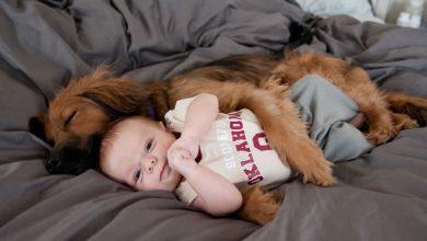 26 exemplos de amor de cachorro incondicional que vai derreter seu coração - exemplos de amor de cachorro incondicional que vai derreter seu coracao 390x220