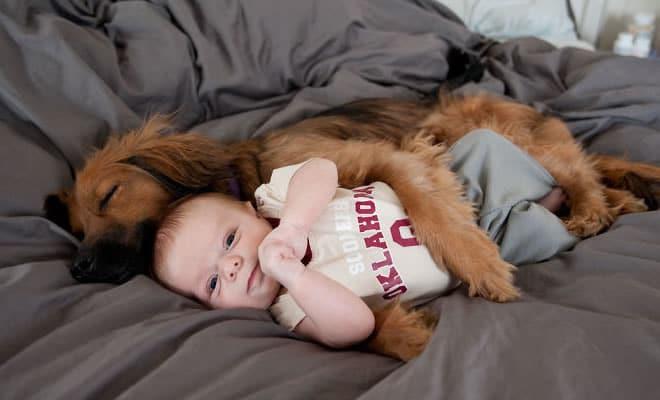 26 exemplos de amor de cachorro incondicional que vai derreter seu coração 42