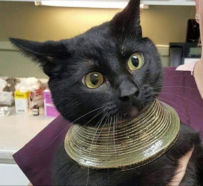 18 vezes que gatos nos fez sorrir de orelha a orelha 18