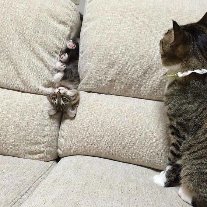 29 gatos tontos que vão fazer você rir alto 7