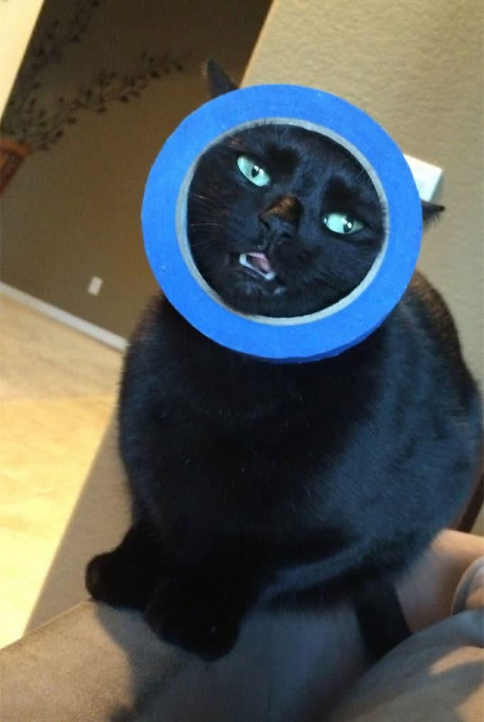 29 gatos tontos que vão fazer você rir alto 27