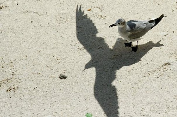20 vezes que sombras transformaram imagens comuns em obras de arte 18