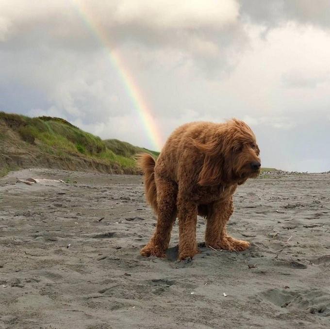 22 animais que definitivamente não estão preparados para ter sua foto tirada 3