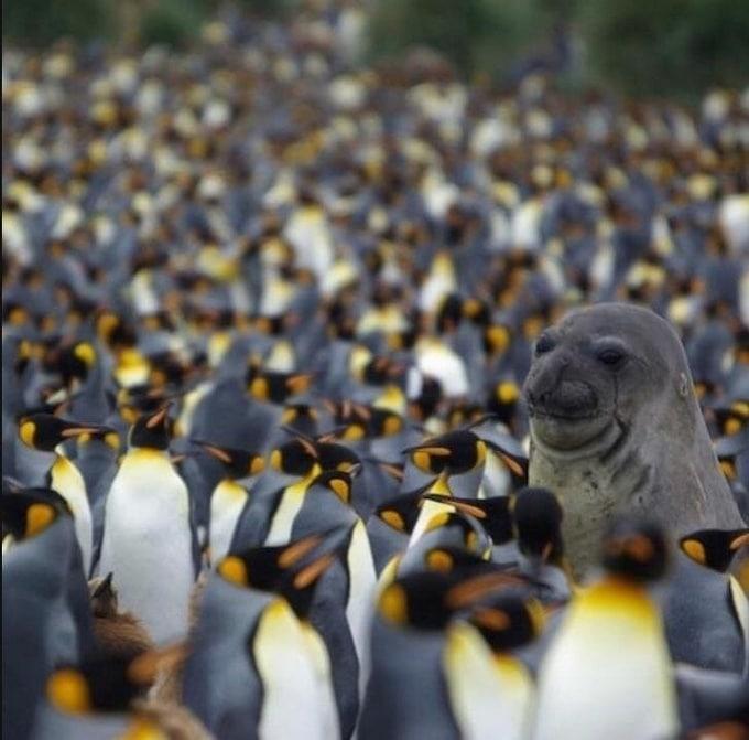 22 animais que definitivamente não estão preparados para ter sua foto tirada 4