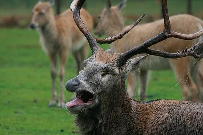 22 animais que definitivamente não estão preparados para ter sua foto tirada 16
