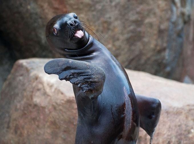 22 animais que definitivamente não estão preparados para ter sua foto tirada 17