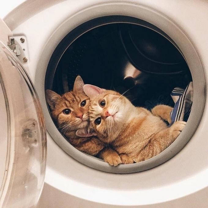 28 motivos para ter um gato em sua vida 3