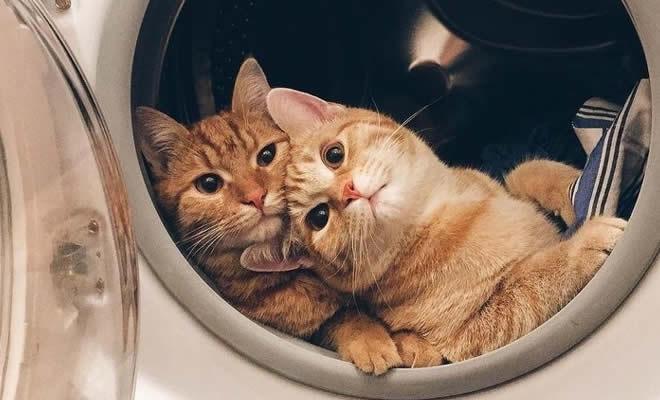 28 motivos para ter um gato em sua vida 1