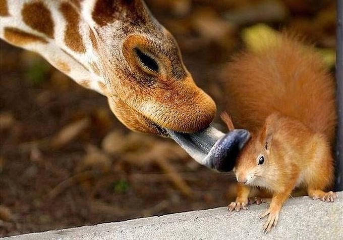 14 amizades animais incomuns que poderiam derreter o coração de qualquer pessoa 4