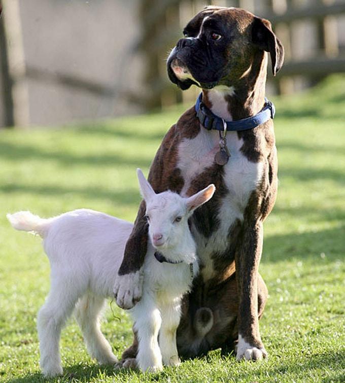 14 amizades animais incomuns que poderiam derreter o coração de qualquer pessoa 5